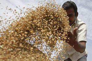 food act, food act India, food security in india, food security act, food security act in india, National Food Security Act, Socio Economic and Caste Census, SECC 2011, Uttar Pradesh, Rajasthan, Maharashtra