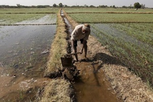 Through the user-friendly mobile technology based platform which integrates a toll-free number, farmers can call to report a wildlife conflict incident. (Reuters)