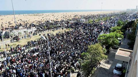 Earlier in the day, the ongoing tussle between Tamil Nadu state as a whole and the Supreme Court over the famous bull-taming sport Jallikattu escalated, with people thronging at Chennai's Marina Beach in support of the festival. (PTI)