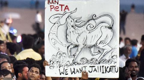 Youngstres and students during a protest to lift the ban on Jallikattu and impose ban on PETA, at Kamarajar Salai, Marina Beach in Chennai on Wednesday. (PTI)