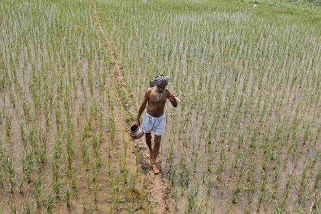 Tamil Nadu, Punjab, Agriculture, agricultural productivity, farm loans, fertilisers, quality seeds, Commission for Agricultural Costs and Prices