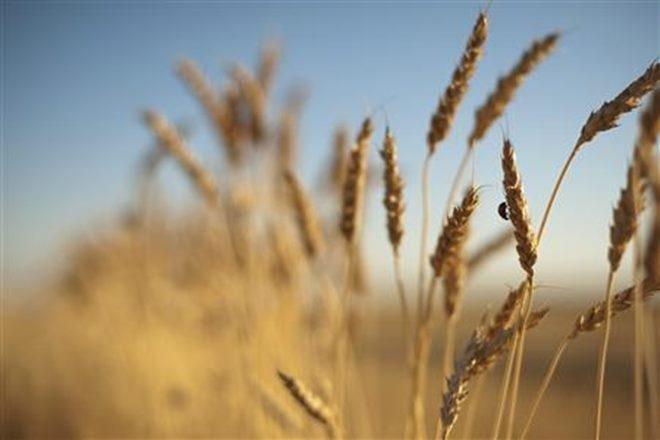 import duties, higher production, FCI, Ram Vilas Paswan, sugarcane production, price fluctuations, standard deviations