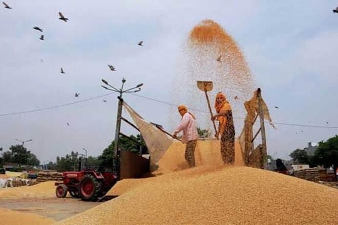 Food Corporation of India, FCI, rabi marketing season, wheat procurement, agriculture ministry