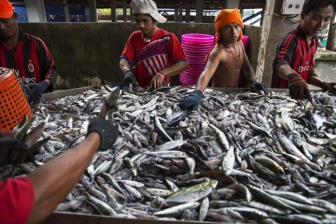 fish, all fish stores, all fish stores reuters, reuters all fish stores, all fish stores in india, india fish
