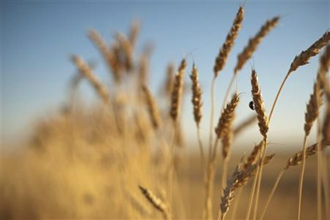 punjab, punjab news, punjab latest news, punjab farming, punjab agricultural sector, punjab wheat farming, punjab rice farming, run jaitley, Amarinder Singh