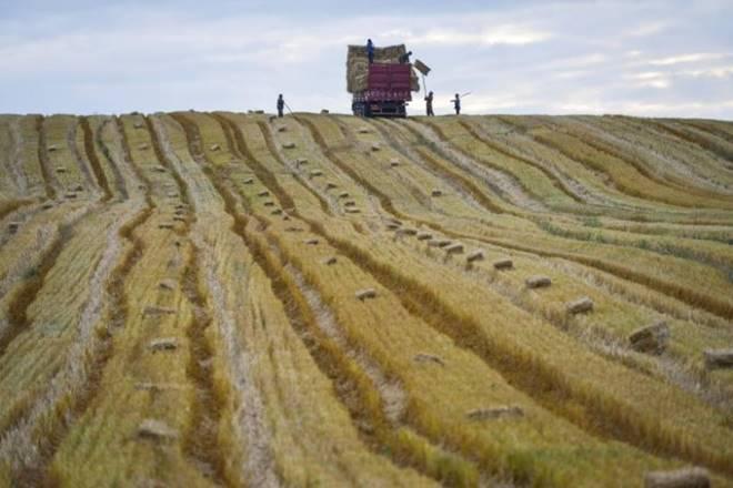 agriculture, agriculture news, agriculture india, agriculture industry india, india economy, political economy structure