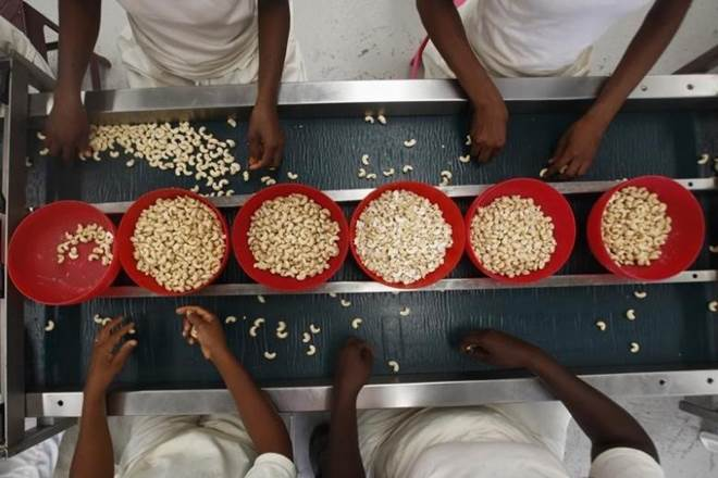Cashew kernel prices, cashew reports, cashew increased production, cashew traders