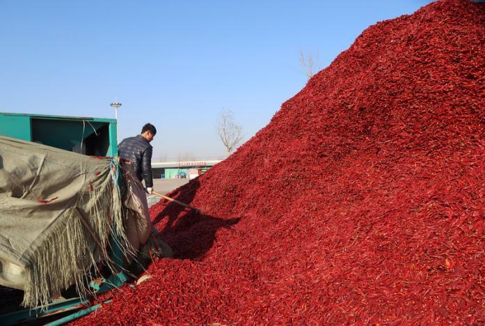 Chilli, Chilli news, Chilli price, Chilli price in india, Chilli price to come down, Chilli acreage, Chilli farmers, Chilli farmers india, Chilli farmers in india