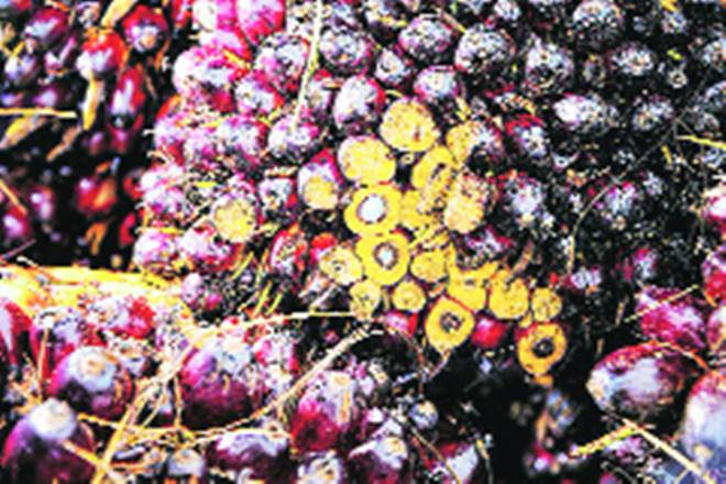 Bumper crop impact, farmers, sale of oil seeds, edible oil imports rice