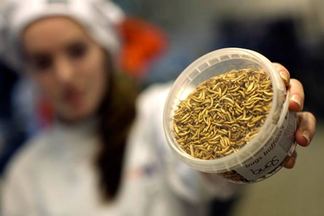 cumin, cumin prices, spices, spices market, indian spice growth