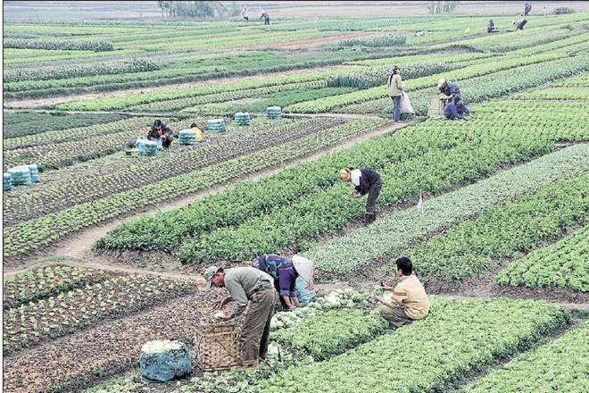 Monsoon,kharif crops,Meteorological Department,Long Period Average, kerala,Andhra Pradesh