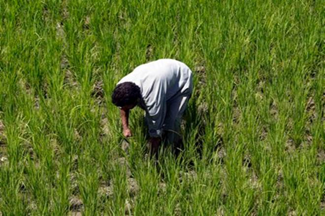 farm loan waivers, farmers MSPs, farmer distress