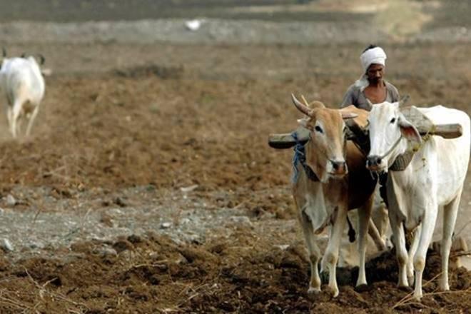 Farmers protest in Madhya pradesh, Farmers protest, Farmers protest news, farmers strike, Madhya pradesh, Madhya pradesh farmers protest, mp farmers protest, narendra modi, farm loan waiver, enam