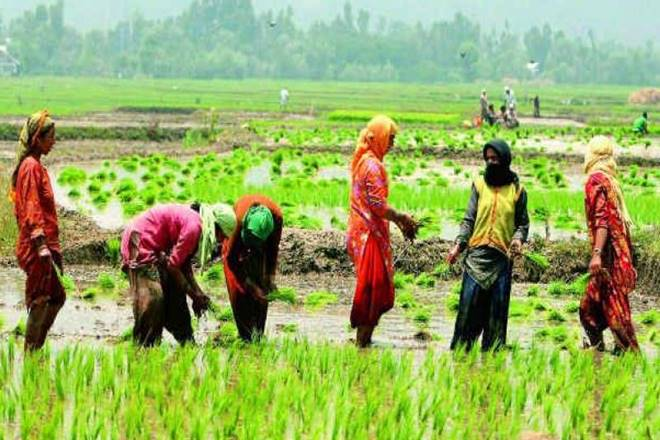 monsoons, kharif crops in monsoon, crops loans, sustained rain deficit