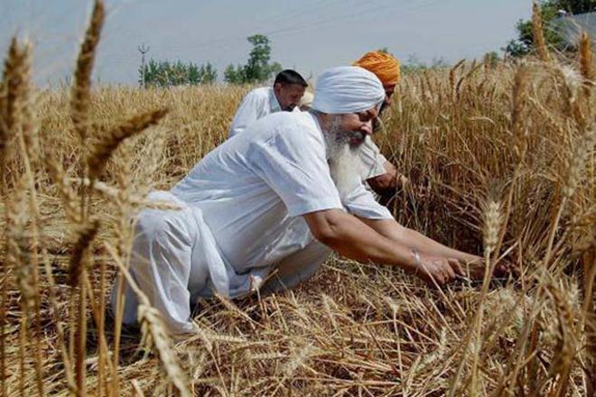 NFSA ,NFSA grain,Food Corporation of India,NFSA scheme, food ministry