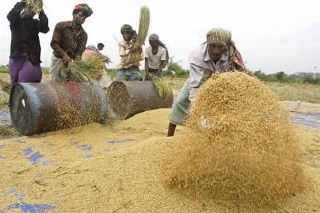 Rice traders, Rice traders in India, Rice industry, Rice traders campaign, rice exporters, MRL, Tricyclazole, All India Rice Exporters Association , global basmati exports
