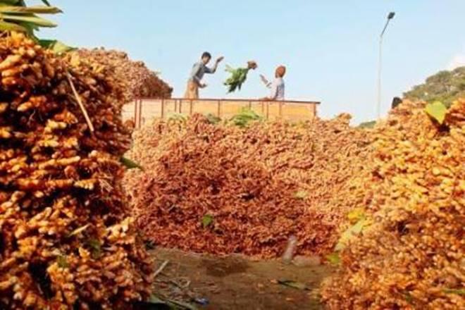 Turmeric market, turmeric trade high, turmeric increasing demand, turmeric commodity, turmeric exports