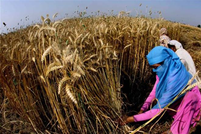 FCI, Food Corporation of India, Open Market Sale Scheme, wheat procurement, wheat industry in india, wheat farmers, wheat buyers, OMSS