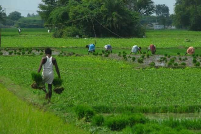 eNAM, haryana, haryana agriculture market, agriculture market news, eNAM news, enam app, pm narendra modi, narendra modi news
