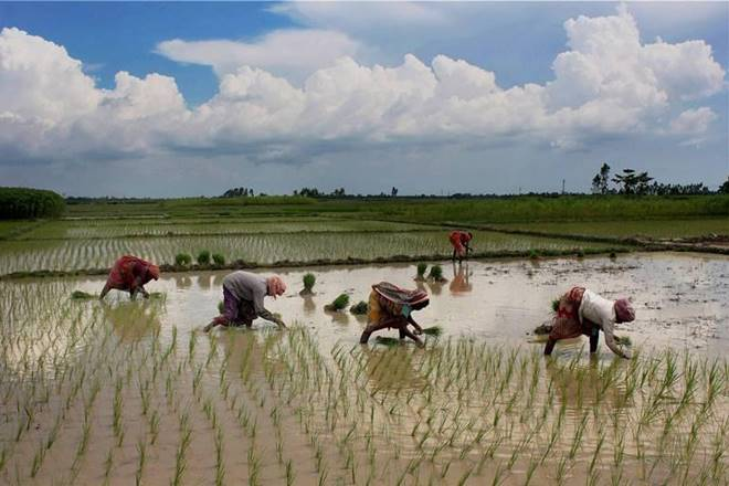 Monsoon in India, Rains boost water level, reservoirs, reservoirs in india, LPA, kharif crop sowing, kharif crop, hydel power, Central Water Commission, India Meteorological Department, LPA rainfall, rice, pulses, coarse cereals, oilseeds, sugarcane, foodgrains production