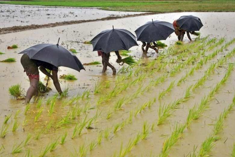 Monsoon, India, rainfall, kharif sowing