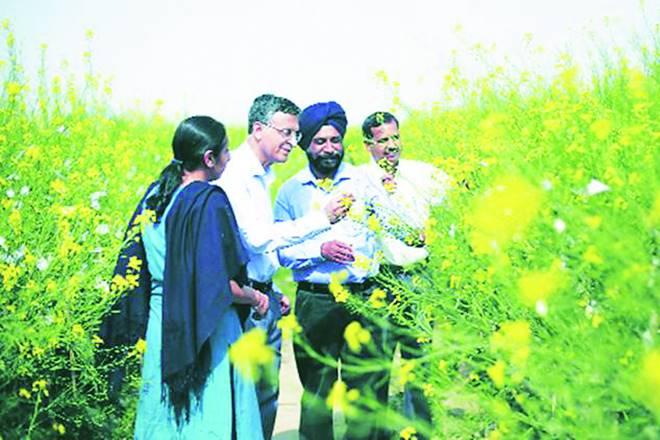 mustard, Economists, Narendra Modi