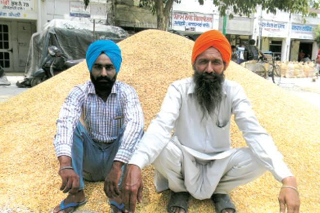 Punjab, Minimum Support Prices, MSP, Niti Aayog, mandi prices, maize, Punjab, Madhya Pradesh, Bihar, Rajasthan, Agricultural Produce Market Committee