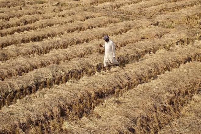 farmers, landless farmers, farmers crisis, farm loan waiver, demonetisation, farmers debt
