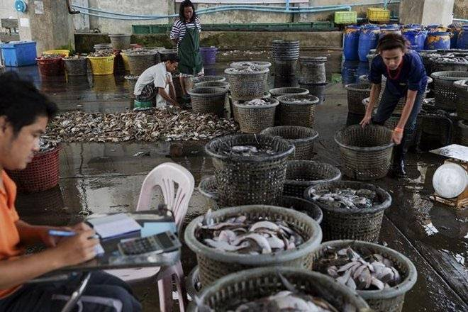 fisheries, vessels, fish production