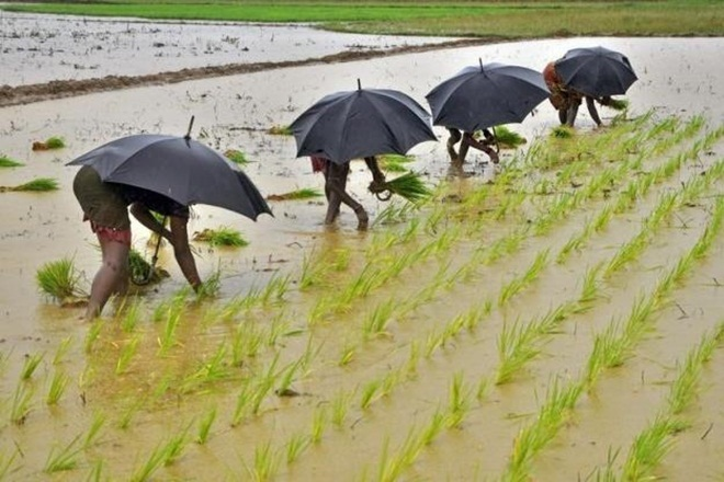 Monsoon, India, rains widespread, crop sowing