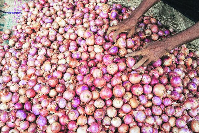 Onions, onion prices, Union ministry of consumer affairs, Onion prices at Lasalgaon, APMC,