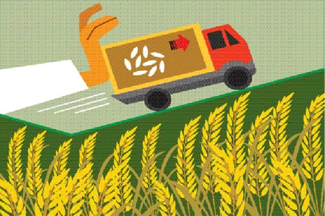 Farm production, rice, India, Bangladesh