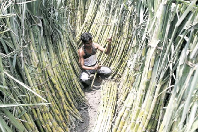 Maharashtra, sugar