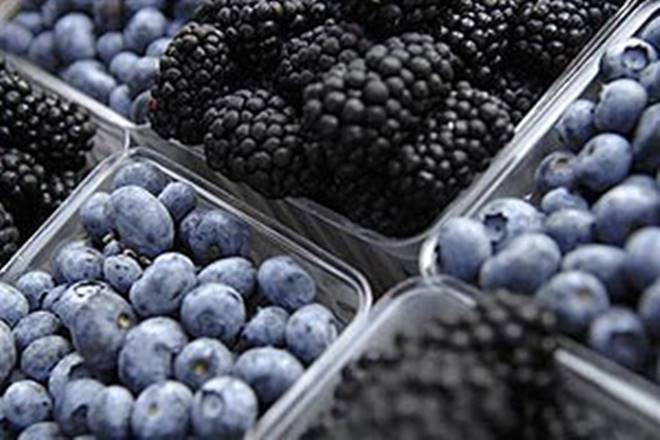 Chilean Blueberry, Committe in India, Chilean, blueberry