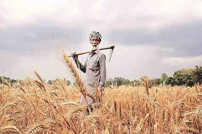 Horticulture crops, MT, foodgrain