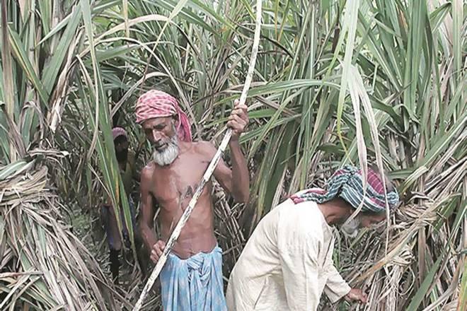 Uttar Pradesh, Private millers, Farmers, sugarcane