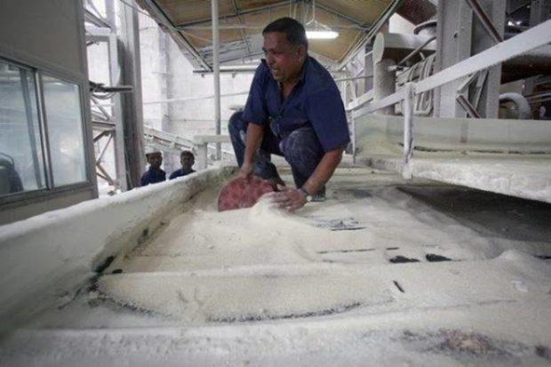 Sugarcane, sugar production
