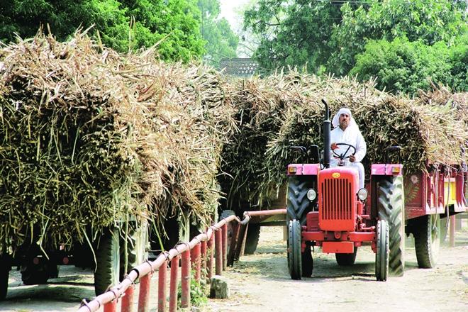 Sugar imports, sugarcane, agriculture