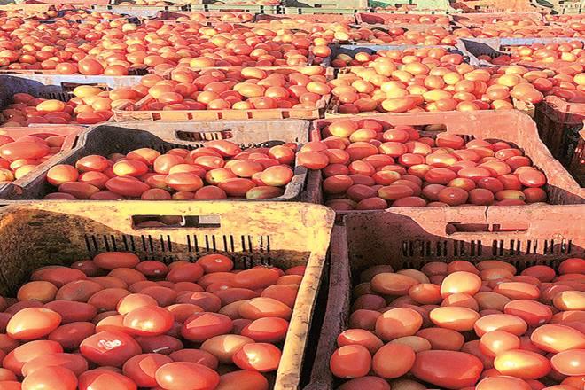 tomato prices,Vegetable Growers Association of India,Shriram Gadhave,VGAI,Pimpalgaon Baswant Agriculture Produce Market Committee,Narayangaon auction,Bangladesh,Mumbai