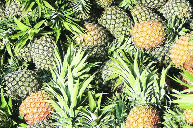 Tripura pineapples, Tripura pineapples business, Tripura pineapples trade, Tripura pineapples export, APEDA, Spicejet