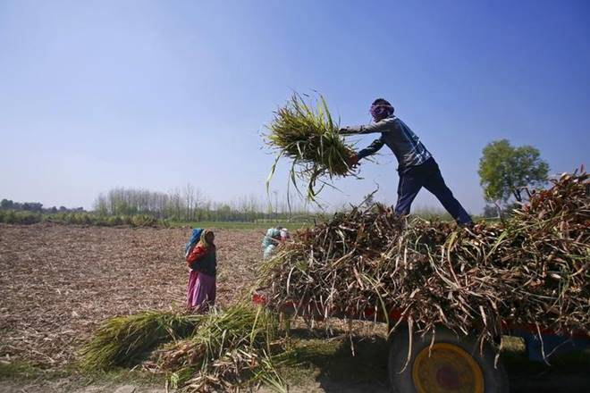 post-harvest losses, agriculture, India