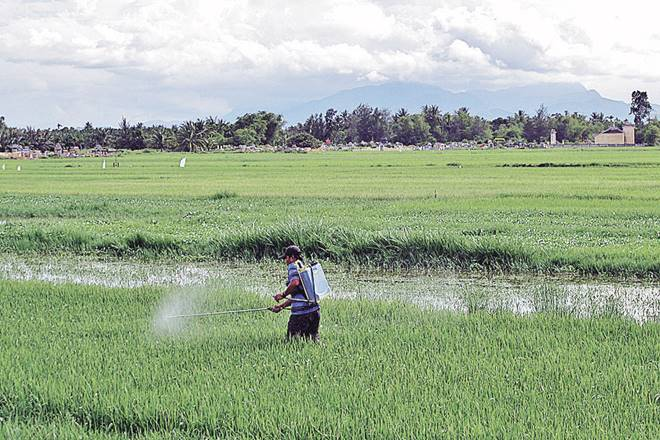syngenta, Bayer, Monsanto, farmers deaths, Maharashtra
