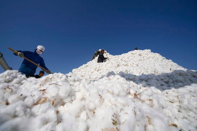 cotton, cotton at msp purchase, maharashtra government decision on cotton sell