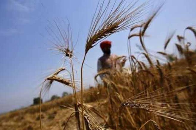 Narendra Modi government,Minimum Support Price,wheat production,demonetisation, rural india, rabi, kharif crops,Food Security Act,FDI in multi-brand