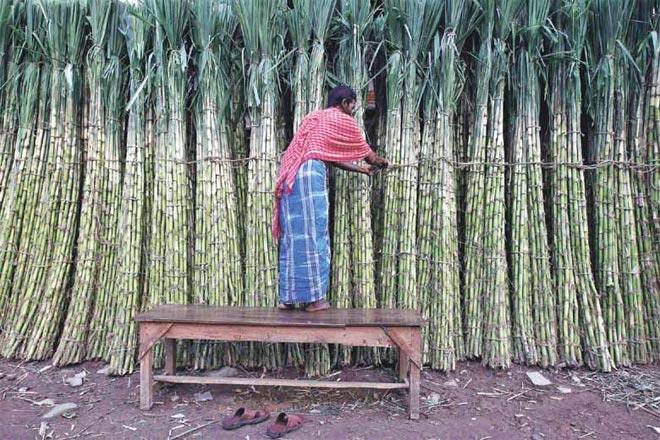 Yogi Adityanath,Yogi Adityanath government, cane price in UP,UP Cooperative sugar mills,sugarcane development ,Simbhaoli group,Bajaj groups,sugar industry