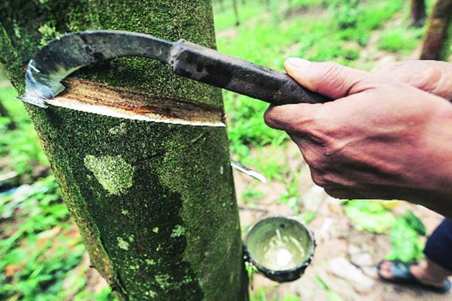 Rubber growers, monsoon, rubber business