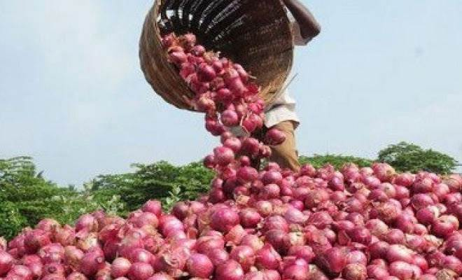 onion, onion prices, onion rates, onion supply, onion demand, onion season, onion growth, onion exports, onion imports,
