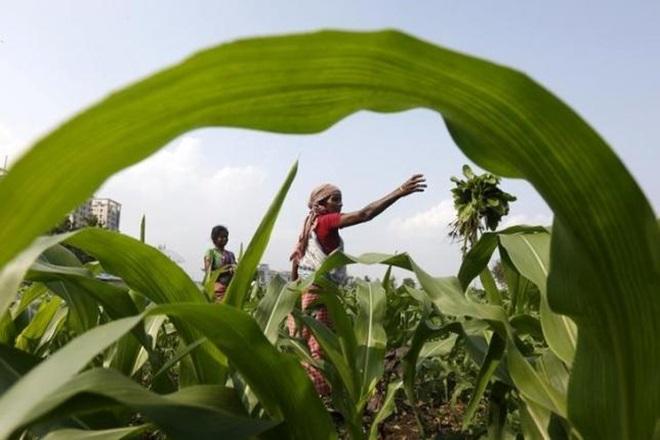 maharashtra agriculture board, maharashtraland,export development zones,Thane, Nashik
