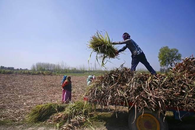 Narendra Modi, farmers, Narendra Modi government,BJP, gujarat,Saurashtra region,Union governmen,FCI,OMSS,Union finance ministry, sugar price,basmati rice, farm distress,non basmati rice exports