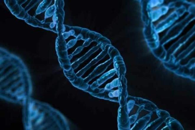 Human immune system, gene editing, CRISPR-Cas9s, gneome